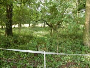 Stav chlumského hřbitova v 2012